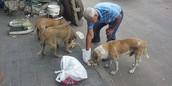 perros rebuscando comida en la calle