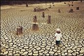 The After Affect of Deforestation