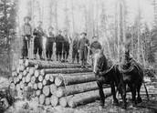 Men cutting timber