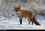 Netherlands Animal