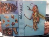 Grasshopper Internal Diagram