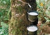 Why is rubber such an important resource?