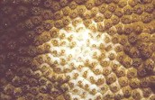 Coral Reef Bleach