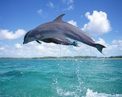How many different types of dolphins are there?