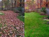 Leaf Vacuuming/Mulching