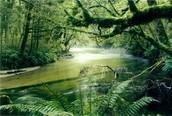 South East Asia Rainforest