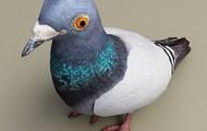 Strong Beaks