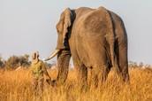 Largest Land Animals