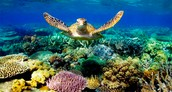 If you would like to donate to help save our coral reefs click the link below