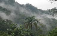 San Lorenzo Cloud Forest