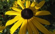 Kom hier en zie de mooiste bloemen van heel nederland!