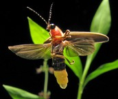Insects Communication