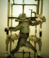 Enslaving Primates