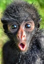 GOING BANANAS!!!🙊 🙈 🙉
