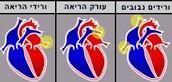 המסתמים בלב