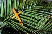 Palm Sunday Mass Schedule at St. John Vianney