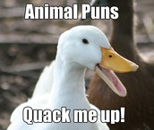 Animal Puns Quack me up