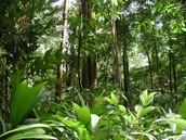 The Amazon's oxygen supply