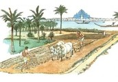 Agriculturalist