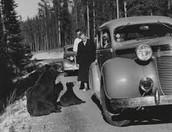 Yellowstone 1950