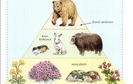 Tundra Animals and Plants