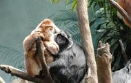 Two monkeys fight over a tree to sleep and eat from