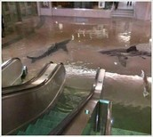 Sharks in the Subway