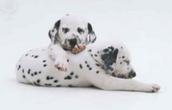 Info on Puppies