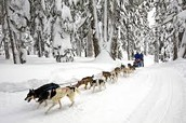 Dog sledding started  to treat the snowbound patients