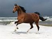 Horses habitat