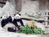 Pandas Exhibit