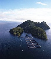 How do salmon farms harm the environment