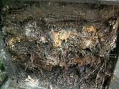 Anaerobic Composting