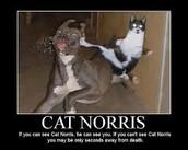 cat norrisss