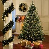 Christmas Tree: Canada