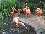 Barranquilla Zoologic