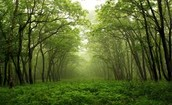 The beautiful forest