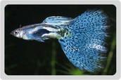 My Fascinating Fish