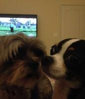 Yo tengo dos perros. Se llaman Tucker y Thor
