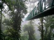El bosque de nubes