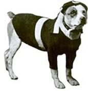 Mex the Dog