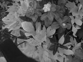 Plants after dark