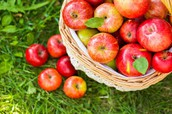 Hillcrest Orchards Field Trip: October 26!
