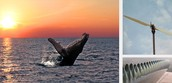 Using Whales Flippers For Efficient Wind Power (WHALEPOWER CORPORATION)