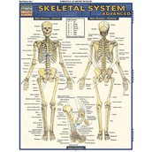 What does the Skeletal System help with?