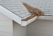 Include gutters on your spring cleaning list
