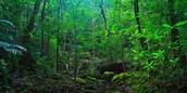 Rainforests worldwide
