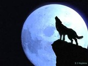 Wolfs and the Moon