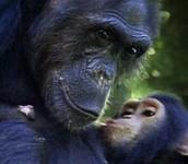 kissing his dad