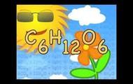 C6H12O6